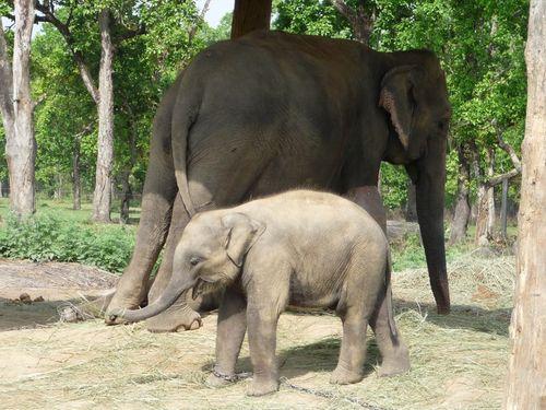 La maman et son bebe