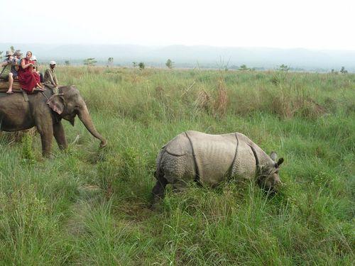 On a trouve un rhino!