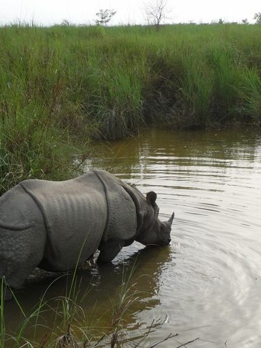 La mare aux rhinos