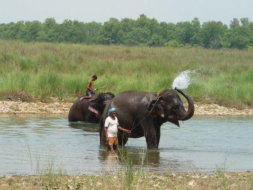 Le bain des elephants